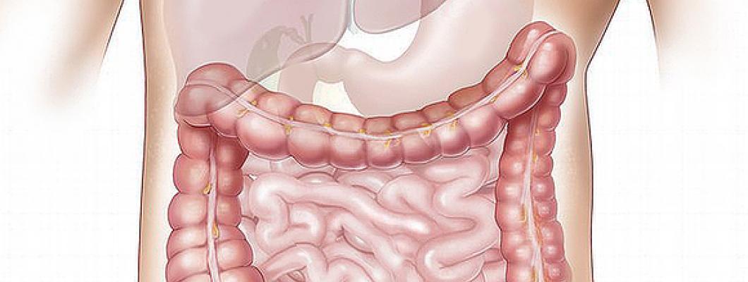 Îmbunătăţeşte-ţi sănătatea intestinală cu Vitamina C și Acidul R-Alfa Lipoic