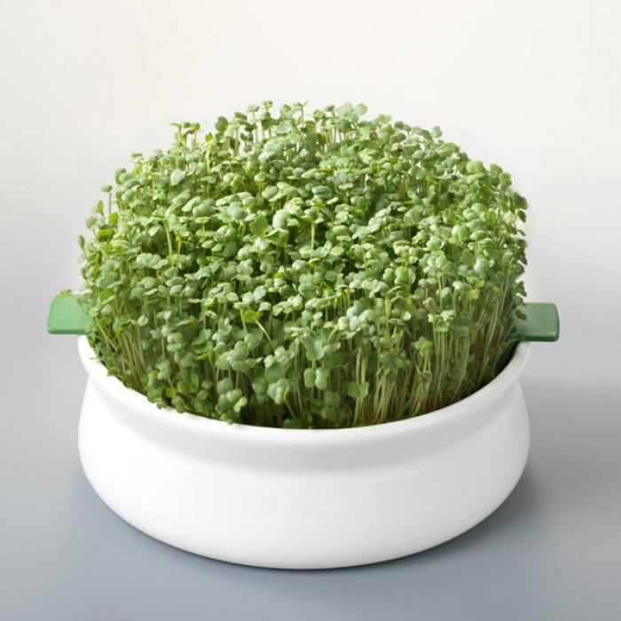 Vas de ceramica cu sita pentru germinare seminte mucilaginoase