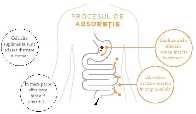 procesul de absorbie a nutrientilor incapsulati lipozomal