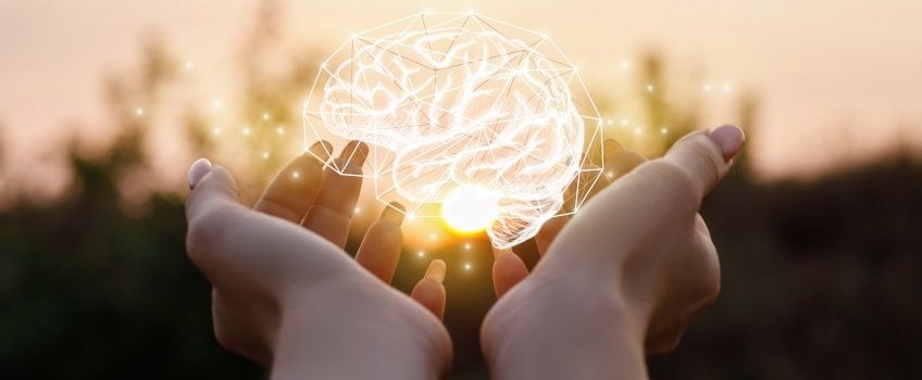 brain with phospholipids