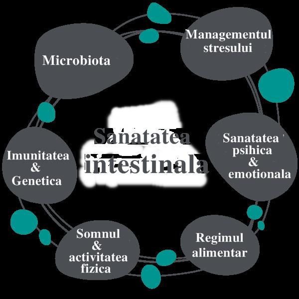 diagrama sanatate intestinala